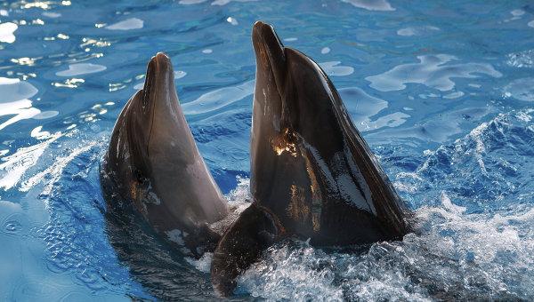 Дельфины, архивное фото