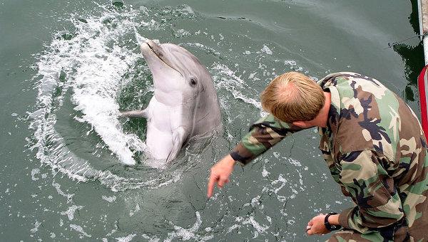 Картинки по запросу Украинские боевые дельфины погибли в Крыму фото