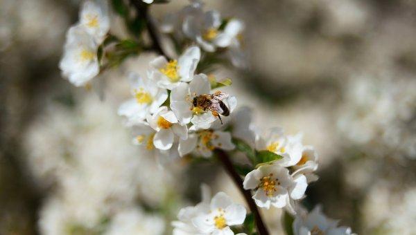 Оса на цветке. Архивное фото