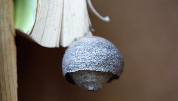 Осиное гнездо на книге. Архивное фото