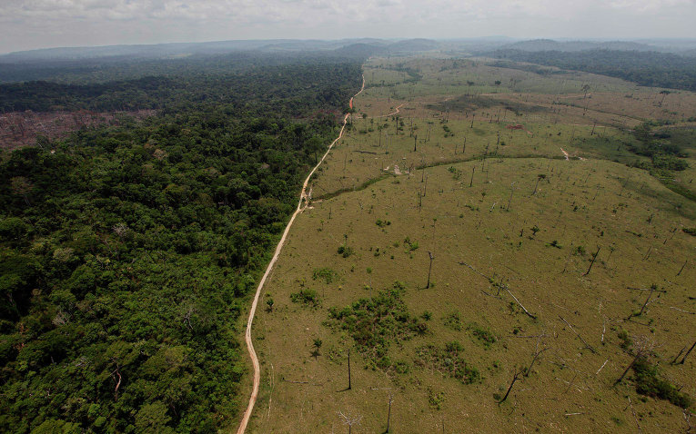 """amazon rainforest research paper outline Rainforest cafe, inc: outline to rainforest cafe research - the beautiful amazon rainforest """"covers a vast area of of this research paper."""