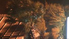 Ураган Артур гнул и ломал пальмы на побережье Северной Каролины в США