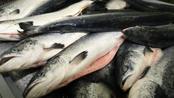 Охлажденный лосось в производственном цехе рыбоперерабатывающего предприятия