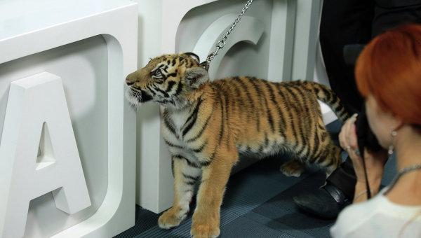 Тигр стал новым героем программы Спокойной ночи, малыши!