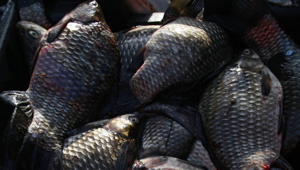 Лоток с рыбой. Архивное фото