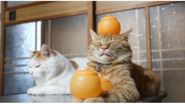 Реклама кота с апельсинами