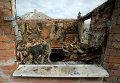 Кошка сидит в окне разрушенного после артобстрела дома в Семеновке