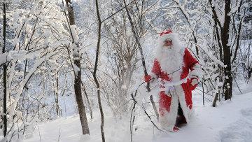 Дед Мороз в зимнем подмосковном лесу
