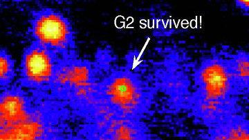 Объект G2, выживший во время своего самого близкого подхода к черной дыре