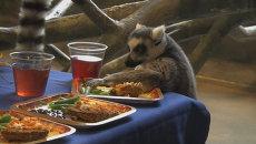 Лемуры съели индейку из бисквита и зеленую фасоль в День благодарения в США