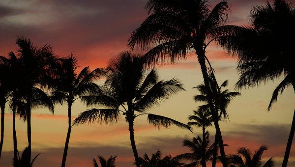 Пальмы на закатном солнце на Гавайских островах. Архивное фото