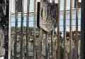 """Бойцы батальона """"Айдар"""" во время беспорядков у ворот Минобороны Украины. 2 февраля 2015."""