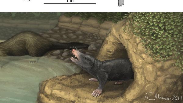 Древнейшее млекопитающее - крот крупным планом