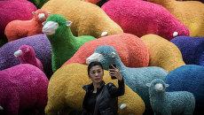 Женщина фотографируется на фоне овец