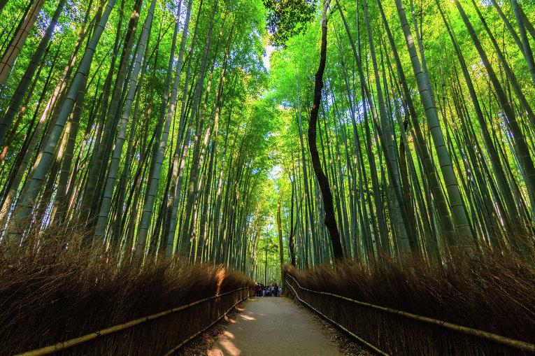 Бамбуковый лес Сагано