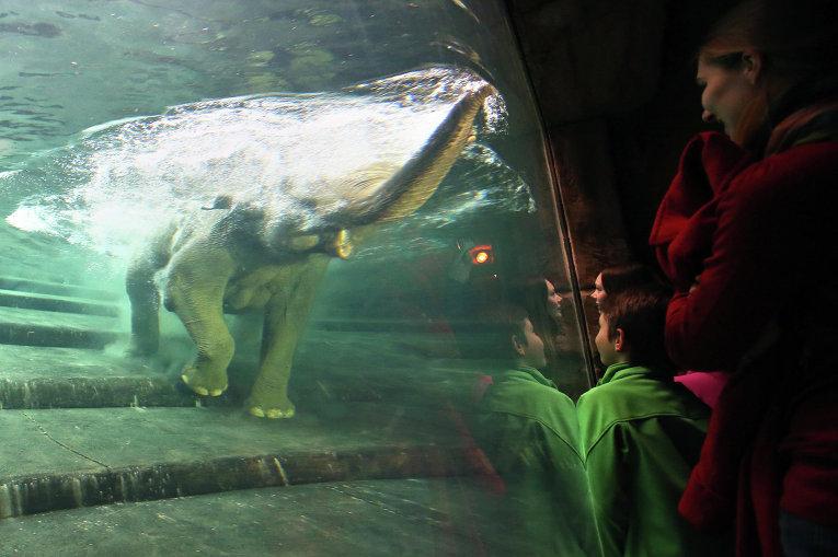 ВМосковском зоопарке родился мандрил