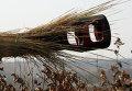 """Самоходная артиллерийская установка 2С1 """"Гвоздика"""" во время учений"""