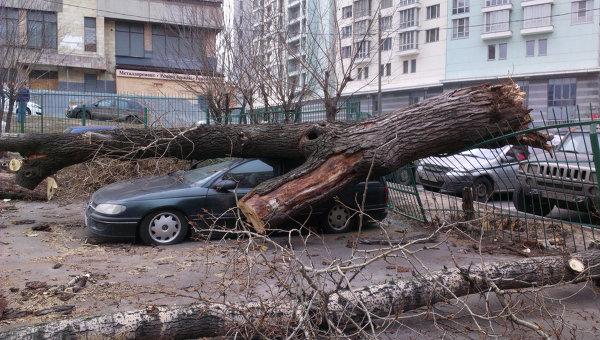 Ураганный ветер повалил вПетербурге 75 деревьев