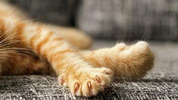 Кошачья лапа, архивное фото