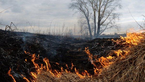 Картинки по запросу пожар сухой  травы