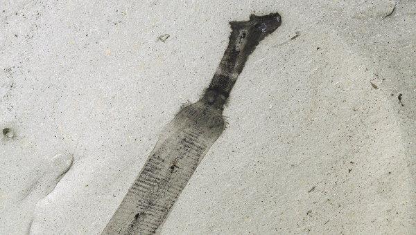 Отпечаток червя-пениса вида Ottoia