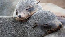 Тюлени. Архивное фото