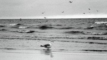 Чайка на побережье моря. Архивное фото