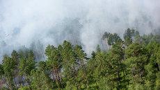 Пожары в лесу. Архивное фото