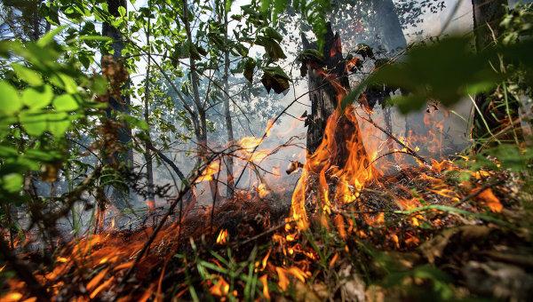 Режим чрезвычайной ситуации влесах сохраняется в3 районах Красноярского края