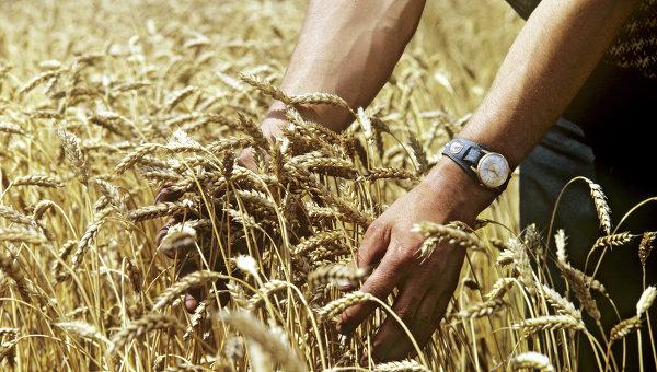 Кутовой объявил орекордном сборе зерна