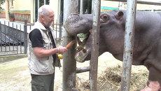 Морковь для бегемота и сено для пони: Зоопарк в Тбилиси открыт после наводнения