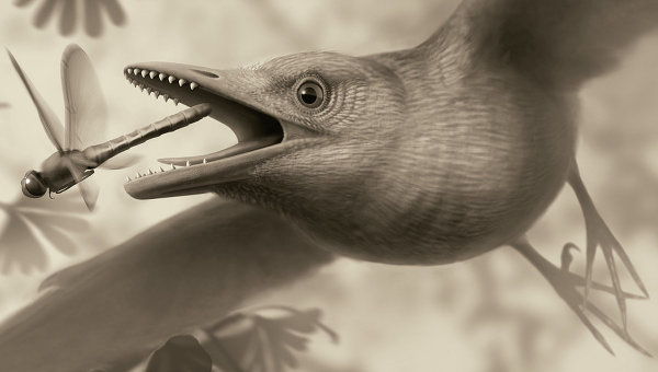 Так художник представил себе древнюю птицу из числа энанциорнисов