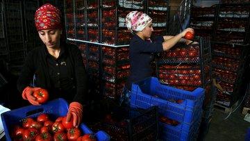 Рабочие на оптовом рынке в Анталье, Турция