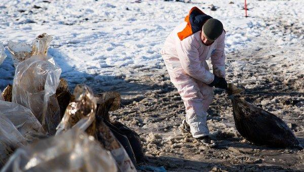 Очистка побережья после нефтяного разлива на Сахалине. Архивное фото