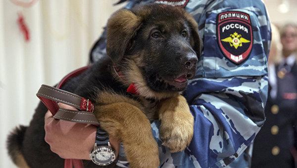 Щенок Добрыня - подарок от российских кинологов-полицейских французским коллегам. Архивное фото