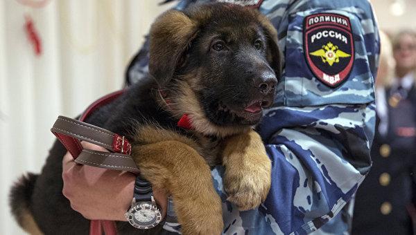 Подарок французским полицейским от российских коллег - щенок по кличке Добрыня. Архивное фото