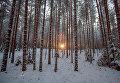 Зимний лес на территории туристического комплекса Карьяла Парк