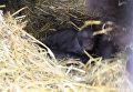 Посетители зоопарка в Уфе впервые увидели пятерых детенышей медведицы Маши