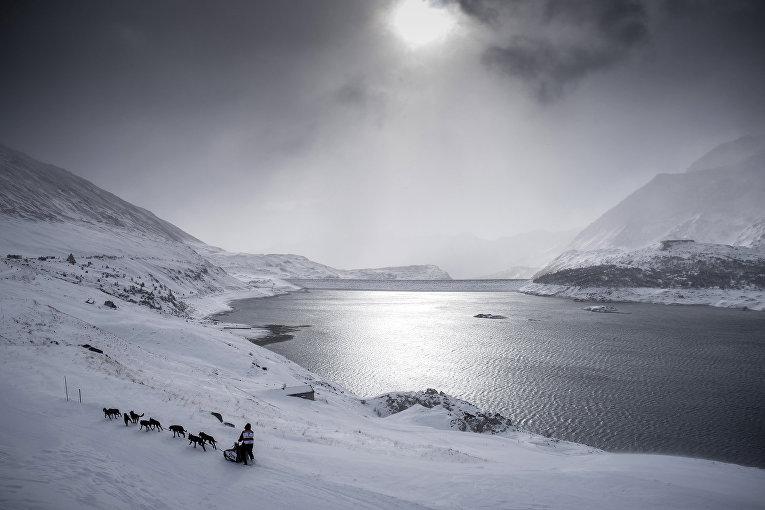 Погонщик собак принимает участие в гонках через Альпы. Январь 2016
