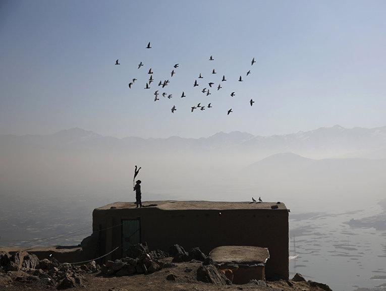 Афганский мальчик и его голуби на крыше дома в Кабуле. Январь 2016