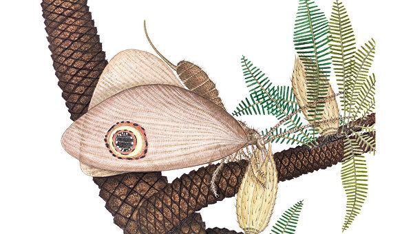 Так художник представил себе юрскую бабочку-глазка