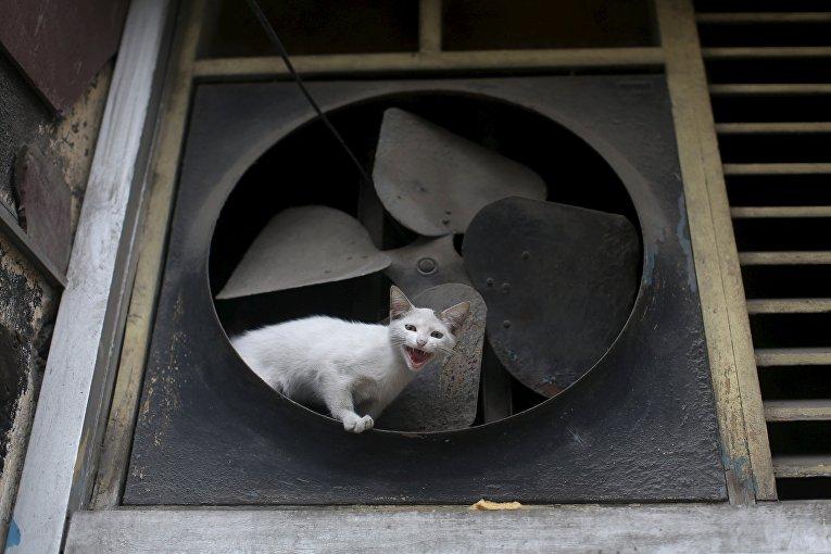 Кошка сидит в вентиляторе в центре Гаваны. 23 февраля 2016