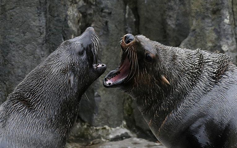 Тюлени в Пражском зоопарке