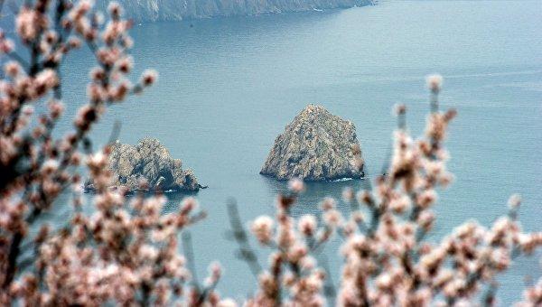 Цветущие деревья в Гурзуфе на фоне Черного моря и скал Адалары. Крым. Архивное фото
