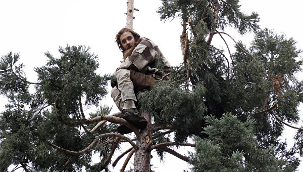 Молодой человек, сидящий на дереве в Сиэттле