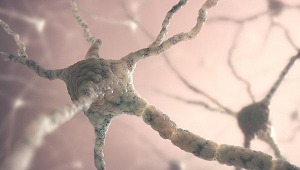 Стволовые клетки могут восстановить мозг после инсульта— Ученые