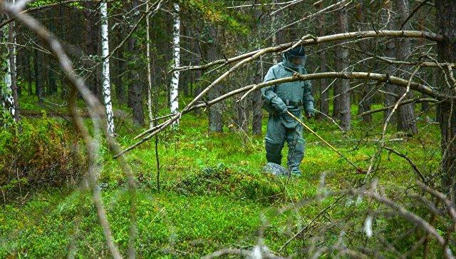 В Заполярье обезвредили более 70 немецких мин времен Великой Отечественной