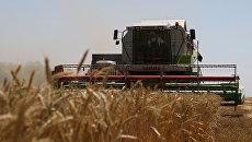 Экспортный потенциал Казахстана в этом году составит не менее 15 млн тонн зерна.