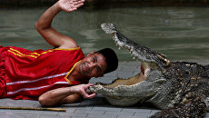 Выступления для туристов зоопарке провинции Чонбури