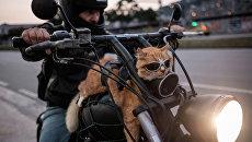 Байкер со своим котом в Рио-де-Жанейро, Бразилия